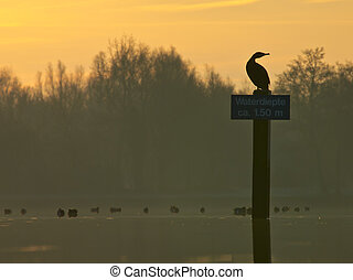 Shag looking backwards - Shag on sign in recreational area...