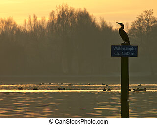 Shag on sign in recreational area during sunrise