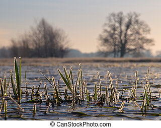 Rimed grass in winter landscape
