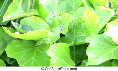 Green leaves  - ecology concept, Green leaves