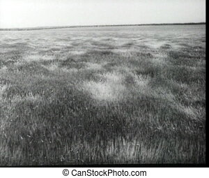 Wind over the field, vintage b&w 16mm footage.