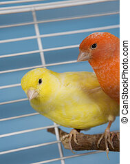 Pet Birds - Two Pet Birds in a Cage