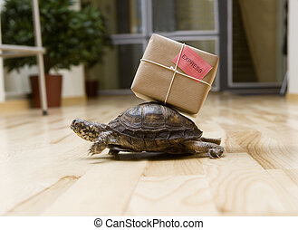 Delivery Turtle - Turtle with a package indoor