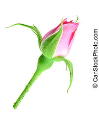 Pink rose bud on a green stalk - Single pink rose bud on a...
