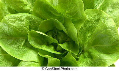 Lettuce, green, closeup, rotate