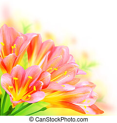 Spring flowers border - Fresh spring flowers border isolated...