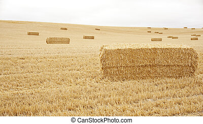 Bales of hay, spanish countryside