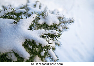 Evergreen fur-tree covered by a snow on the eve of Christmas