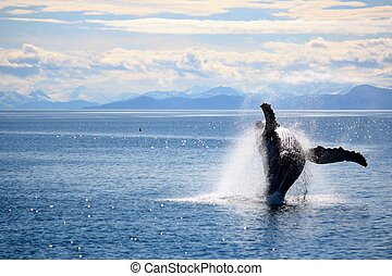 Whale-1 - Whale leaping out of the water