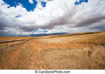 open field in Western Cape, South Africa