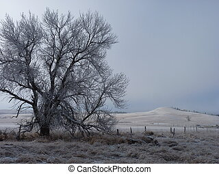 Lone Frost Covered Tree as the Fog Lifts