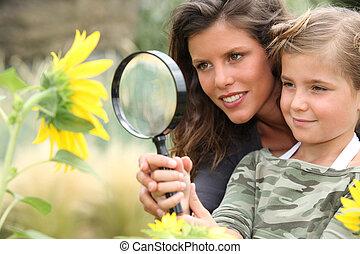 jeune, maman, fille, regarder, tournesol, par, magnifier,...