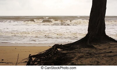 Tree on windy beach - A tree at the beach during monsoon...