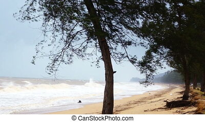 Trees on windy beach - A tree at the beach during monsoon...