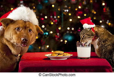 Cat and Dog taking over Santas cookies and milk - Cat and...
