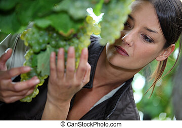 Woman inspecting green grapes in a vineyard