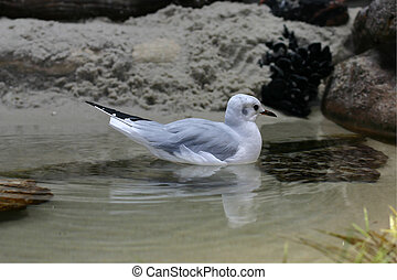Shorebird - A shorebird wades in a tidal pool