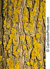 Mossy tree trunk bark closeup background details