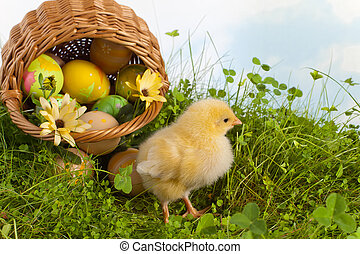 Easter basket with yellow chick