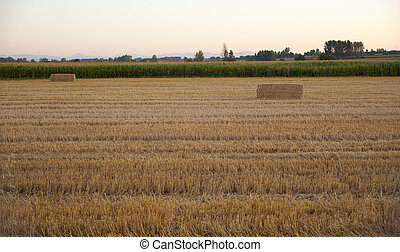 Bales of hay - Field after harvest in Spain