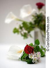 rosa, blanco,  Calla, Plano de fondo