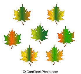 maple Leaves - illustration of maple leaves
