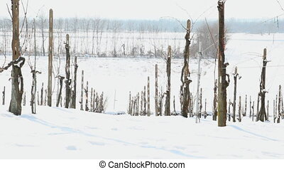 country road in winter - snow covered vineyard with...