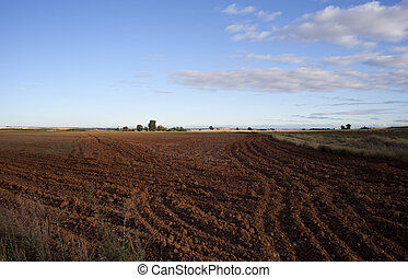 Plowed field - Photo of plowed field in the summer