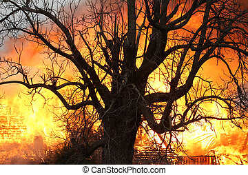Fire Beyond the Old Oak Tree - A centuries old oak bears...