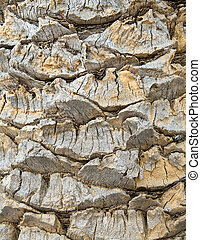 Background in the form of a palm tree bark