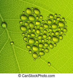 Heart shape dew drops on green leaf Vector illustration,...