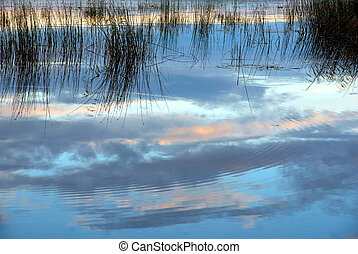Lake with reeds reflected in the water