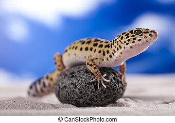 Gecko in a blue sky background - Gecko reptile, Lizard.