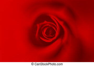 Red-rose abstract background