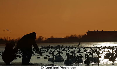 People Feeding Migratory Birds