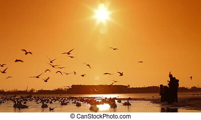 Migratory Birds in Winter - People feeding migratory birds...