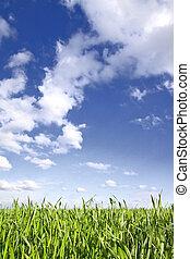 Green grass, blue sky - Closeup on green grass with cloudy...