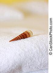 a conch