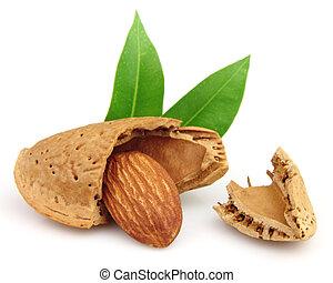 Cut almond with leaf