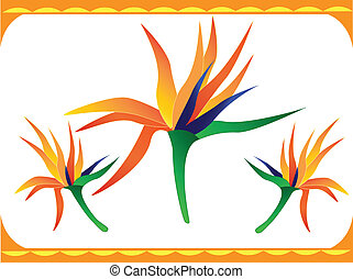 bird of paradise flower - a bright tropical bird of paradise...