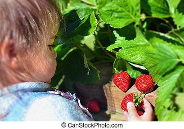 Fruits and Vegetables - Garden Strawberry - A baby picks up...