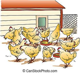 galinha, gaiola