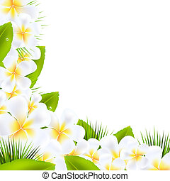 frangipani, flores, fronteras, con, hoja