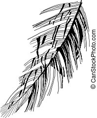 bird's feather drawing