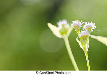 flower weed in green nature - flower weed in the miracle...