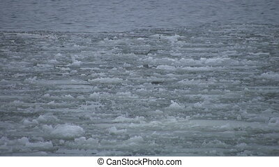 Ice on river - Ice drifts with the current Fraser river,...