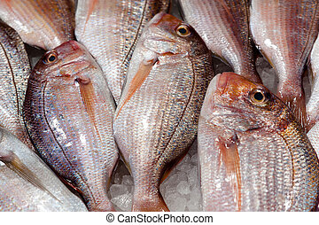 Fresh fish at the food market counter