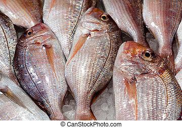 Fresh fish at the food market counter