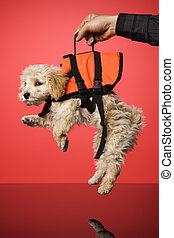 Sweet Dog - Sweet dog with Life Jacket