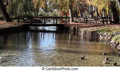 Pond With Ducks, Clitunno Springs - Video clip of pond with...
